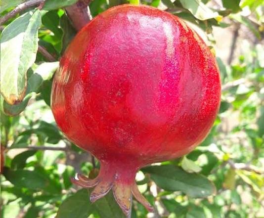 کاربردهای آهک در باغداری
